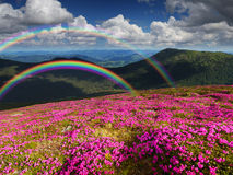 Summer landscape with mountain flowers and a rainbow Stock Photo