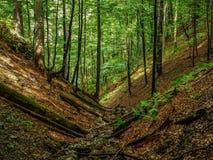 Summer landscape in mountain forest. Summer forest landscape in Pieniny mountains Royalty Free Stock Image