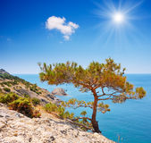 Mountain pine on a rock by the sea Royalty Free Stock Photography