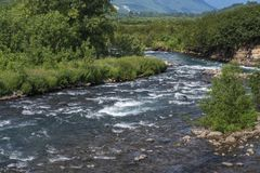 Summer landscape of mountain river and green forest on riverbank stock image