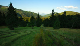 Summer landscape in the mountainous Carpathian region Stock Photo
