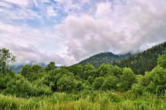 Summer landscape in the mountains with beautiful low clouds Royalty Free Stock Photography