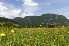Summer landscape in mountains and the dark blue sky with clouds Royalty Free Stock Images