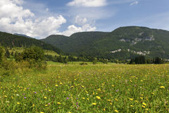 Summer landscape in mountains and the dark blue sky with clouds stock photography