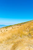 Summer landscape in the mountains Royalty Free Stock Images