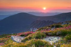 Summer landscape in mountains with the sun. Royalty Free Stock Photography