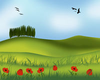 Summer landscape. Nature background with flowers poppies Royalty Free Stock Photography