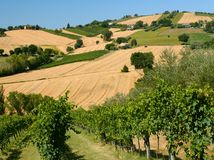 Summer landscape near Corinaldo Marches, Italy Royalty Free Stock Photography