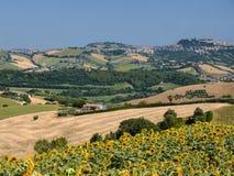 Summer landscape near Monterubbiano Fermo, Marches Stock Images