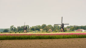 Summer landscape in the Netherlands Royalty Free Stock Photography