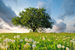 Summer landscape with nobody tree. Summer landscape with nobody big tree Stock Images