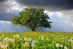 Summer landscape with nobody tree. Summer landscape with nobody big tree Stock Photos