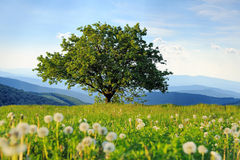 Summer landscape with nobody tree. Summer landscape with nobody big tree on mountain background Stock Photo