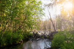 Summer landscape. North Karelia. Russia Royalty Free Stock Photos