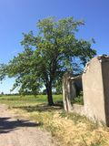 Summer landscape. Old abandoned village on the empty field. Destroyed abandoned house standing in the forest Stock Photo
