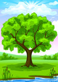 Summer landscape with old tree. Summer landscape of green river coast with old oak tree and blu sunny sky vector illustration Royalty Free Stock Photo