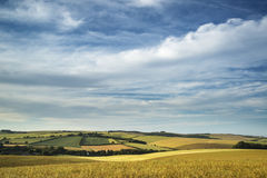 Summer landscape over agricultural farm field of crops in late a Stock Photo