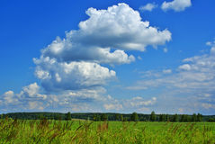 Summer landscape p. Summer landscape with cloudy sky, green grass and trees Royalty Free Stock Images