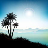 Summer landscape with palm trees Royalty Free Stock Photography
