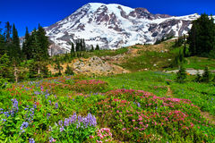 Summer landscape, paradise vista,  Mount Rainier Stock Images