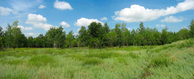 Summer landscape in the park. Panorama Royalty Free Stock Image