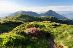 Summer landscape with a path and flowers in the mountains Royalty Free Stock Photos