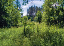 Summer Landscape. Picturesque landscape, grass and trees illuminated by the summer sun Royalty Free Stock Photo