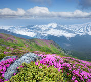 Summer landscape with pink flowers in the mountains Royalty Free Stock Photography