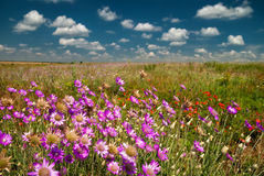 Summer landscape with pink flowers Royalty Free Stock Photography