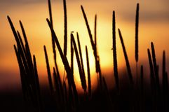 High plant at sunset Stock Image