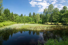Summer landscape with a pond Royalty Free Stock Photography