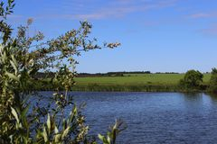 Summer landscape with pond Stock Photography