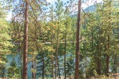 Ponderosa pine trees at Garnet Lake in summer. Summer landscape of ponderosa pine forest with Garnet Lake in background in summer Stock Images