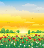 Summer landscape with poppies and daisies Stock Photography