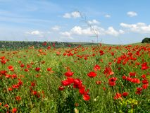 Summer beautiful red poppy field stock photography