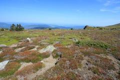 Summer meadow in Pyrenees Stock Photos