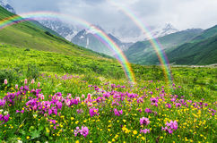 Summer landscape with a rainbow and mountain flowers. Rainbow in the mountains. Landscape with summer flowers. Sunny weather. Zemo Svaneti, Georgia, Caucasus stock photo