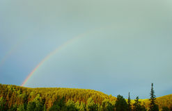 Summer landscape with rainbow over the pine forest Stock Image