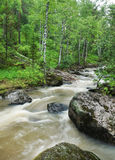 Summer landscape with rapid mountain creek Royalty Free Stock Images
