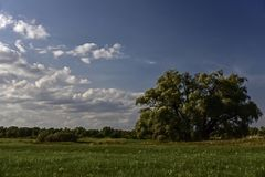 Summer Landscape. In the recreation park `Friendship of Peoples Stock Image