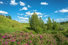 Summer landscape with red flowers. Stock Images