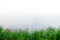 Summer landscape with reeds and marsh Background royalty free stock images