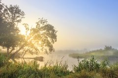 Summer landscape of river bank in early morning at sunrise. Morning nature on river. Scenic view of beautiful river stock photo