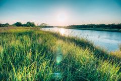Summer landscape on the river bank at sunset. Field grass in the rays of sunset sun on the river bank Royalty Free Stock Image