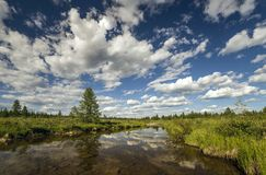 Summer landscape with river and clouds. Forest Royalty Free Stock Photo