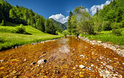 Summer landscape with river and forests Stock Images