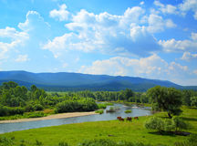 Summer landscape with river mountains and horses Stock Photo