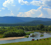 Summer landscape with river mountains and horses Royalty Free Stock Image