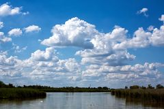 Summer landscape, river Royalty Free Stock Image