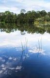 Summer landscape Royalty Free Stock Image